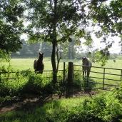 Paarden & Natuur Lettelbert