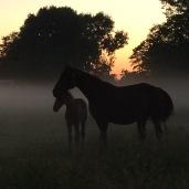 Paarden Hara&Ki